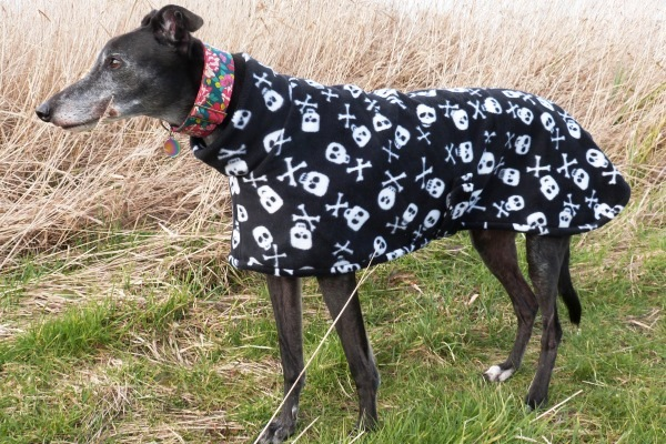 Greyhound fleece coat in skulls and bones