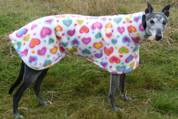 Rainbow Hearts Cuddle Fleece Coat for Greyhounds Lurchers and Whippets