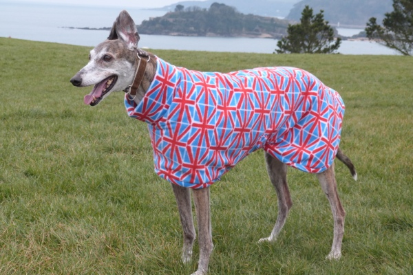 fleece coats for greyhounds in union jack design