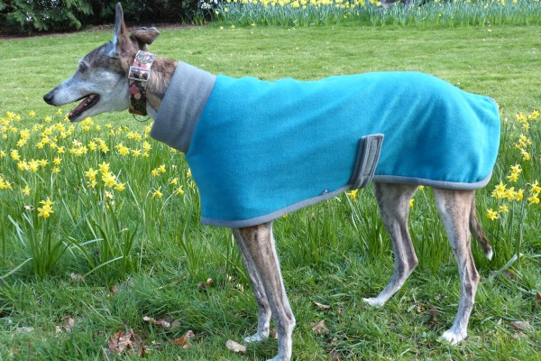 fleece coat for greyhounds lurchers and whippets in teal and charcoal fabric from milgicoats