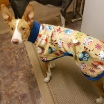 podenco fleece coat in woodland creatures design from milgi coats