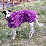 brooke wearing a purple spot greyhound coat