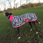 flash wearing a zebra and pink greyhound fleece coat