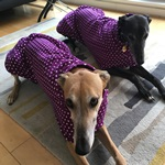 greyhound coat modelled by lottie and charlie