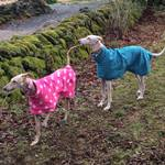 greyhound coats made in uk