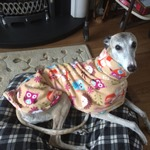 greyhound woodland creatures fleece coat