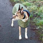 lurcher coat modelled by molly