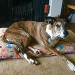 molly on dog bed in woodland creatures design from milgi coats
