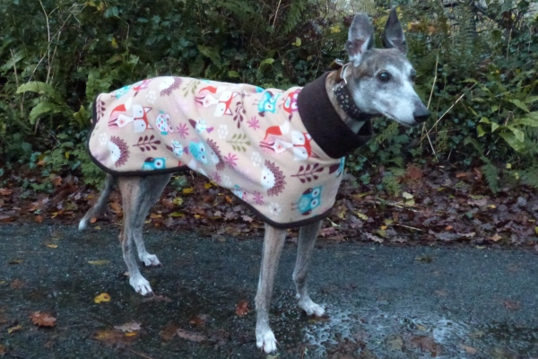 greyhound fleece coat in woodland creatures with brown trim