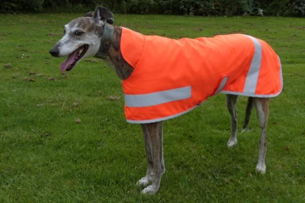 greyhound coats - hi viz coat