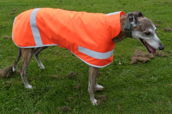 Hi Viz Greyhound Coat in High Visibility Orange