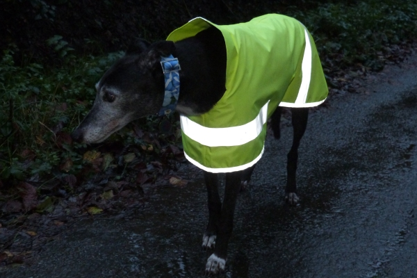 Hi Viz Greyhound Lurcher Whippet Coat