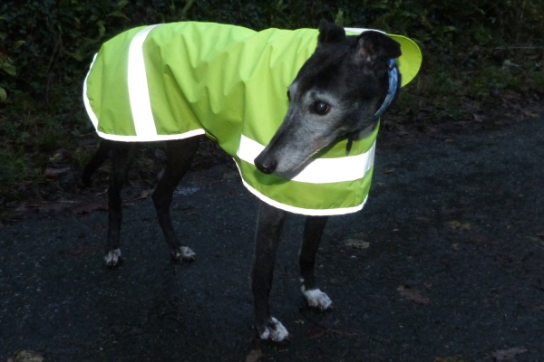 hi viz coat for greyhounds lurchers and whippets