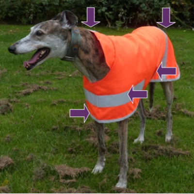 Hi Viz Greyhound Coat position of reflective strips