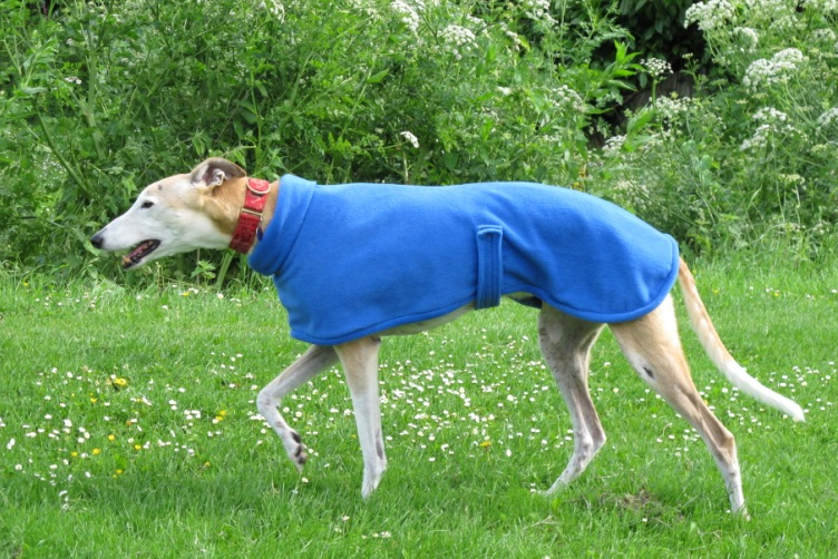 Royal Blue Fleece for greyhounds lurchers and whippets