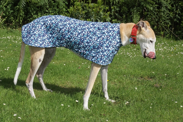 Blue Stars coat for greyhounds lurchers and whippets