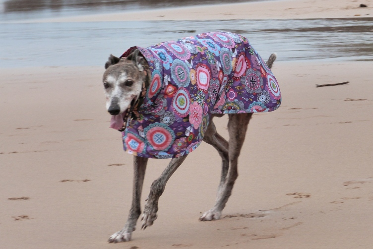 Purple Haze Raincoat for Greyhounds Lurchers Whippets