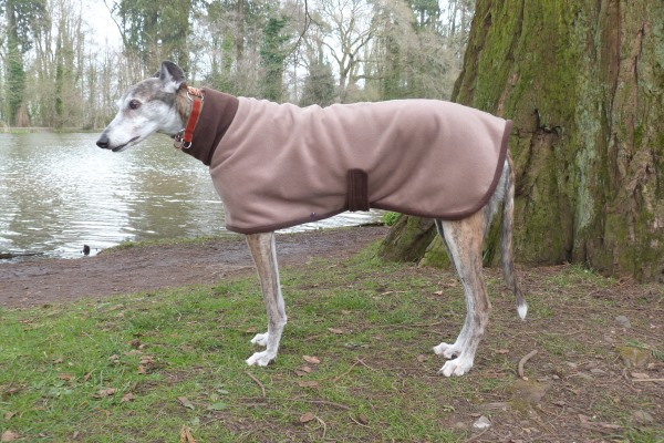 mocha with chocolate fleece coat greyhound