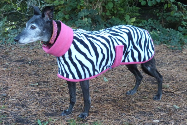 Lurcher Coat in Zebra Design With Pink Trim Fleece