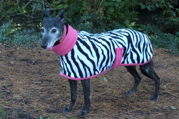 Lurcher Coat in Zebra Fleece With Pink Trim