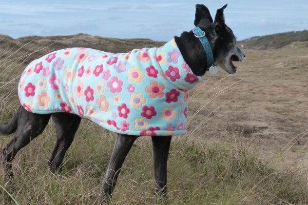 lurcher coat greyhound coat in daisy dreams design
