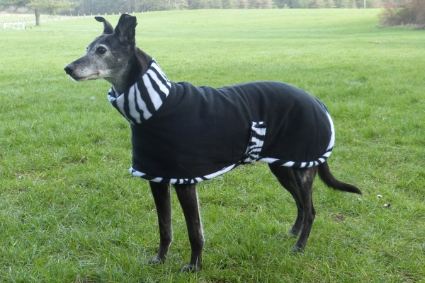 lurcher coat in mono zebra design