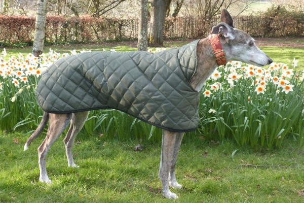 Quilted Greyhound Coat in Olive Green