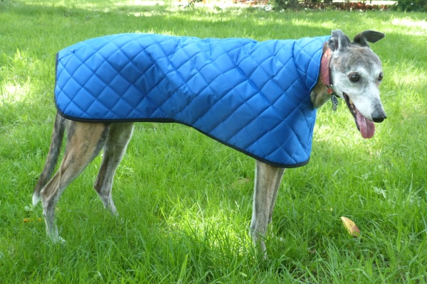 royal blue quilted coat for greyhounds