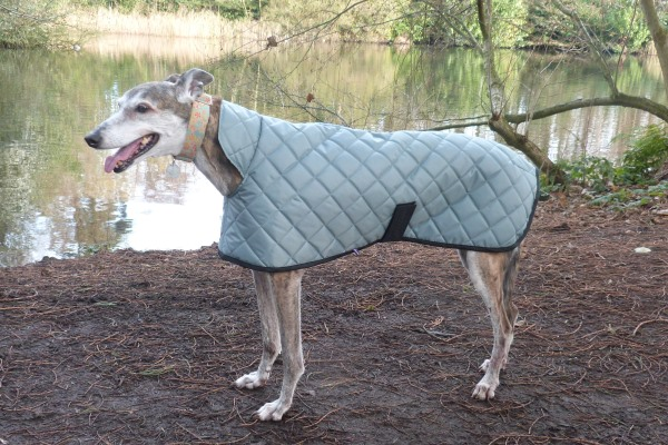 Greyhound Coat Sage Green Quilted