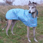Raincoat Greyhound in Turquoise Roses