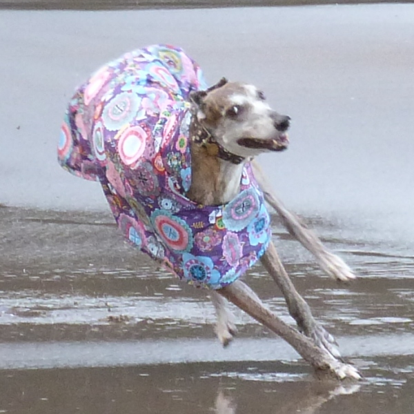 Raincoat for Greyhounds Lurchers and Whippets in Purple Haze design