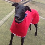 Bryan Dream Coat Celia Cross Greyhound Trust