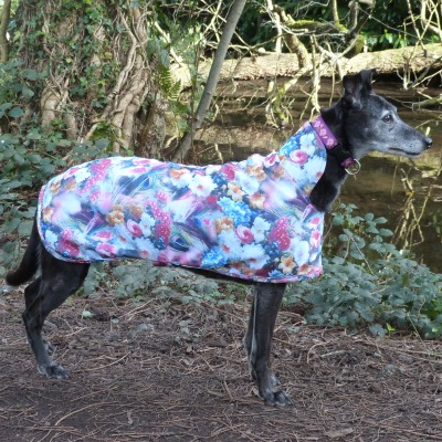 greyhound lurcher and whippet scuba coat in moonlight garden design