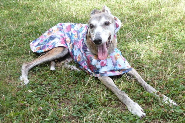 greyhound raincoats in scuba fabric