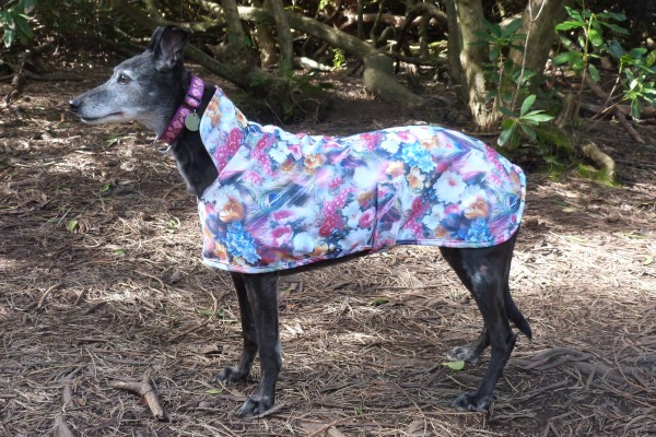 moonlight garden scuba coat for greyhounds lurchers and whippets
