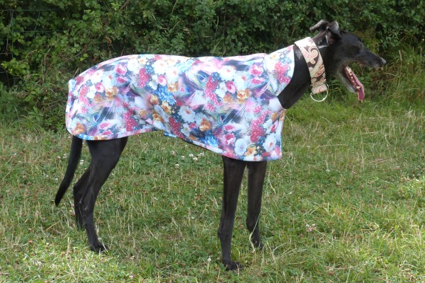 moonlight garden waterproof scuba coat for greyhounds