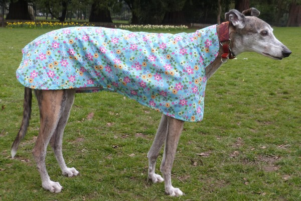 Turquoise Floral Greyhound Walking Out Coat Whippet Walking Out Coat Lurcher Walking Out Coat