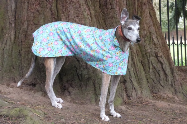 Turquoise Floral Greyhound Walking Out Coat