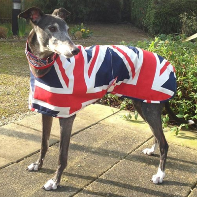 Great British Greyhound Walk Ambassador Coat from Milgi Coats