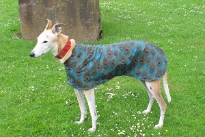 Walking Out Coat for Greyhounds in Peacock Fabric
