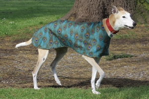 Peacock Walking Out Coat for Greyhounds Lurchers and Whippets