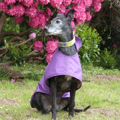 waterproof lurcher coat